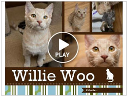 Willie-Woo Update!